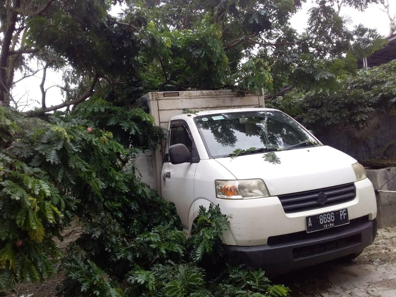 Proyek Pasang Saluran Udith Sebabkan Pohon Tumbang Satu Unit Mobil Bok Jadi Korban